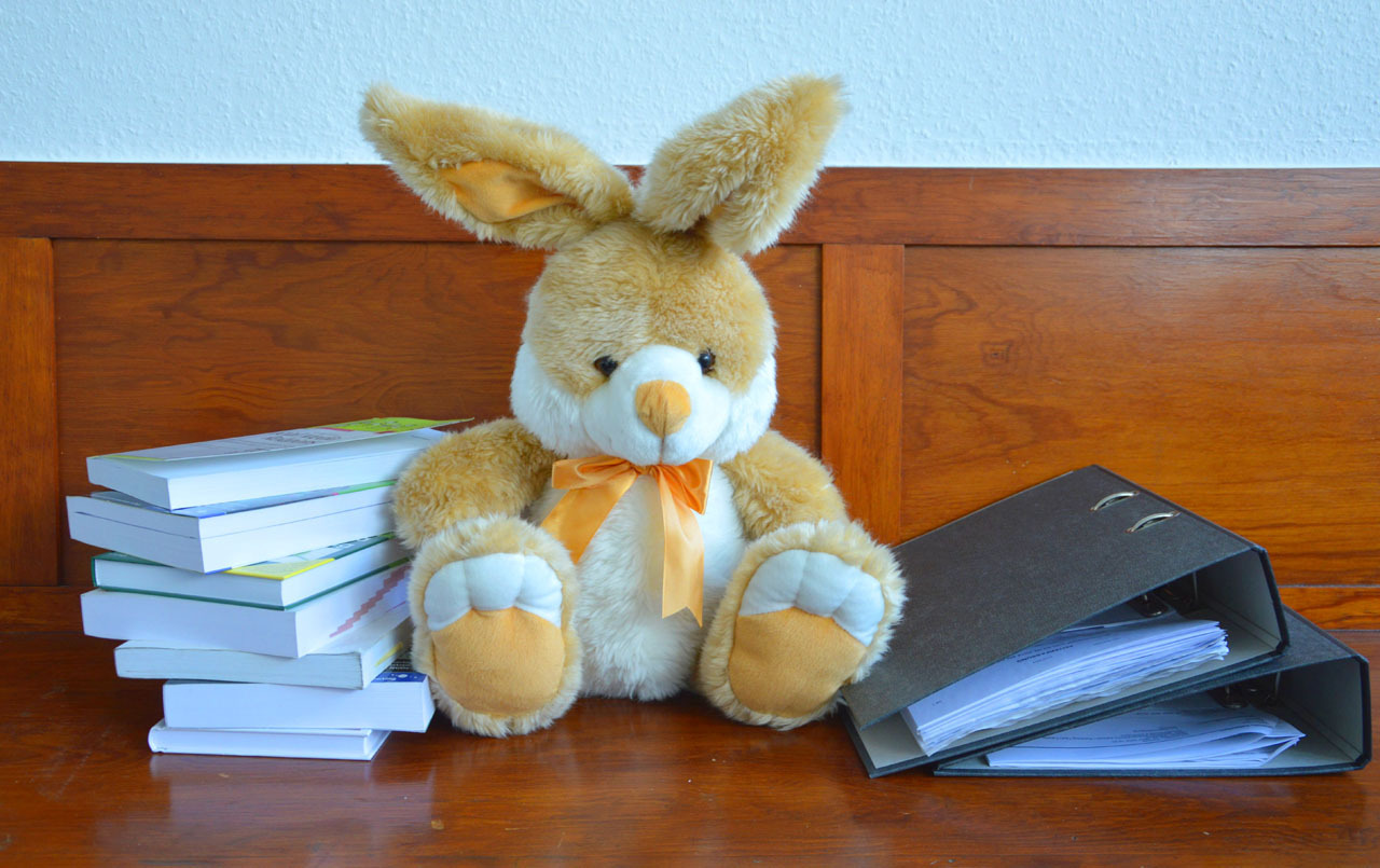 A stuffed bunny among learning materials